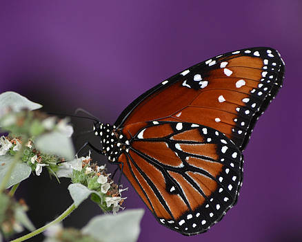 Spotted Beauty by Mary Zeman