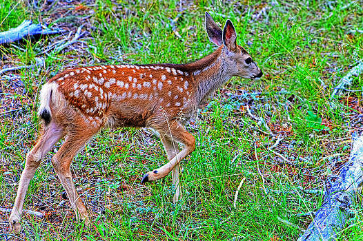 Spotted fawn walking away by Jim Boardman