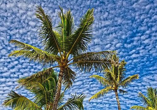 Spotted Hawaiian Sky by Michael Misciagno
