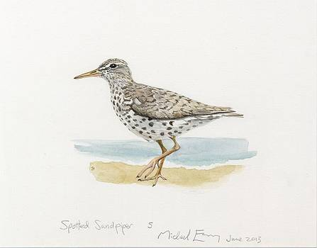 Michael Earney - Spotted Sandpiper