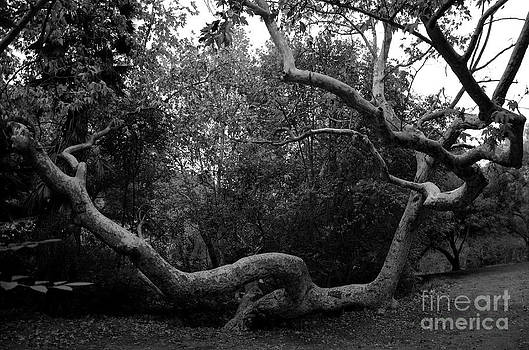 Sprawling Limbs by Clayton Bruster