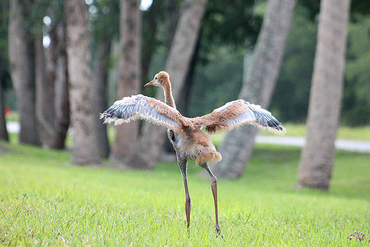 Spread Your Wings by Connie Koehler