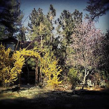 Spring A Bloom #wrightwood #spring by HK Moore