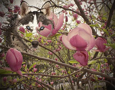 Spring and Beauty by Georgeta Blanaru