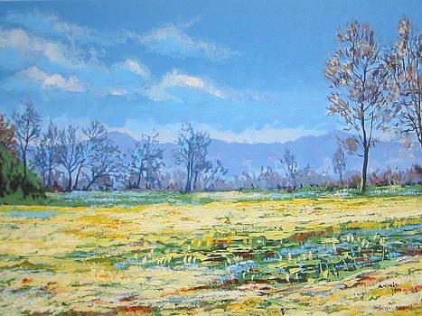 Spring by Andrei Attila Mezei
