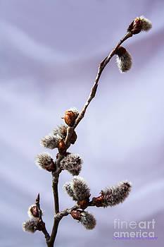 Barbara McMahon - Spring Arrival