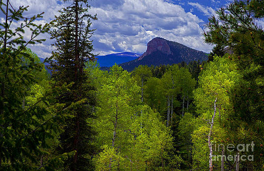 Spring Aspens by Barbara Schultheis