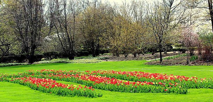 Rosanne Jordan - Spring at Cantigny Gardens
