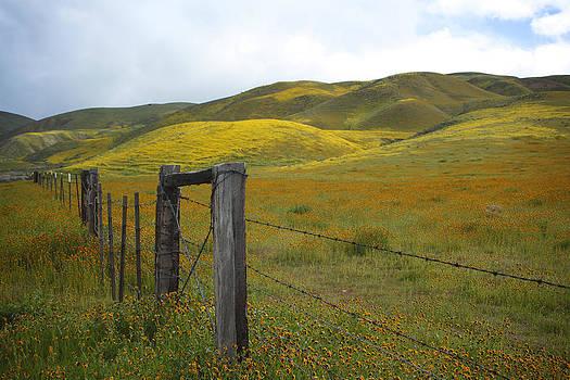 Susan Rovira - Spring at Carrizo Plain