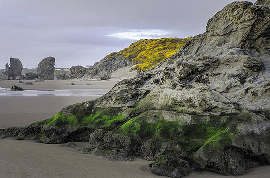 Spring at the Beach by Chris Malone