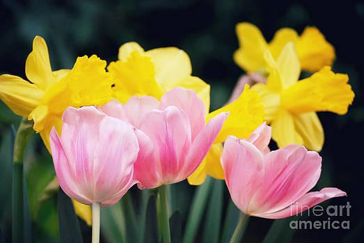 Rachel Barrett - Spring Beauty