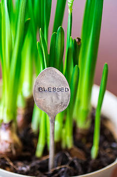 Spring blessing by Miki  Finn