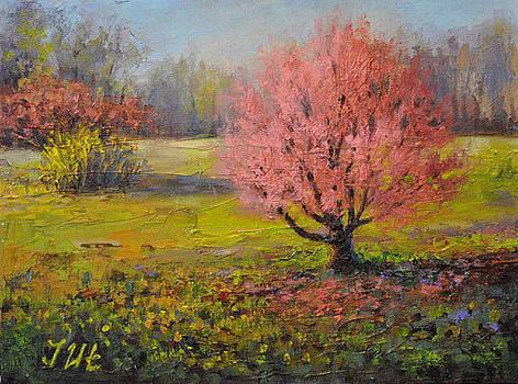 Spring. Bloming cherry. by Julia Utiasheva