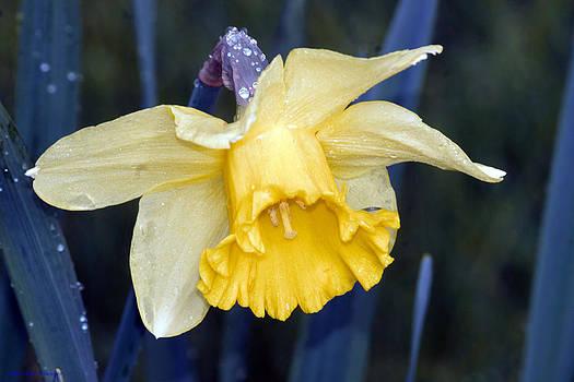 Spring Bloom by Ed Nicholles