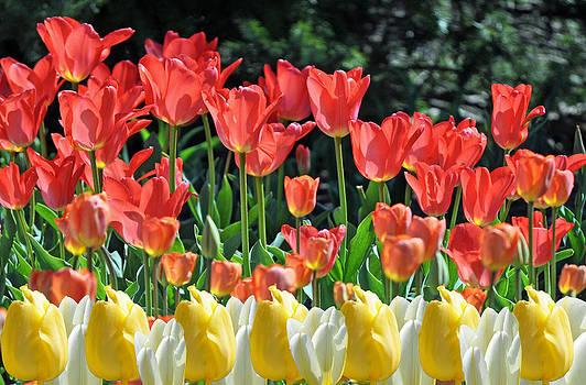 Debra  Miller - Spring Blooms