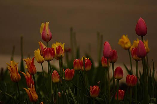 Spring Blooms by Jann Kline