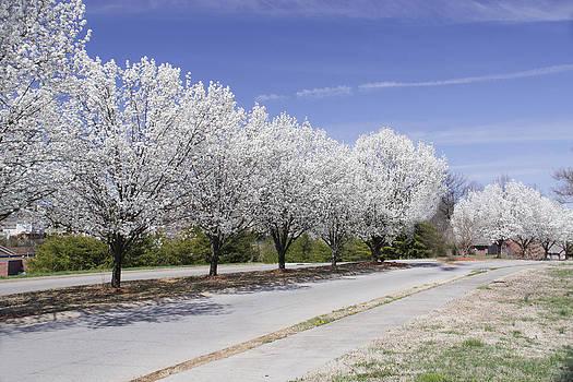 Spring Blooms by Linda A Waterhouse