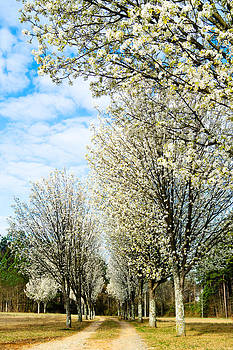Spring Blooms by Robert Hainer