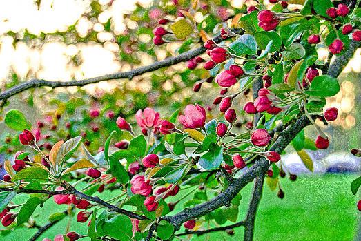 Spring Blossom by Anthony Vlach
