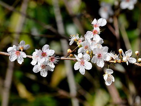 Bishopston Fine Art - Spring Blossom