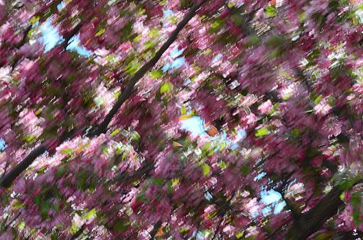 Minartesia - Spring Blossom