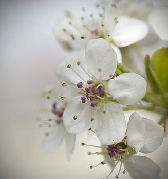 Spring Blossoms by Kathy Williams-Walkup