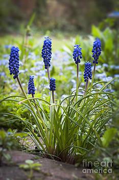 Spring Bluebells by Donald Davis