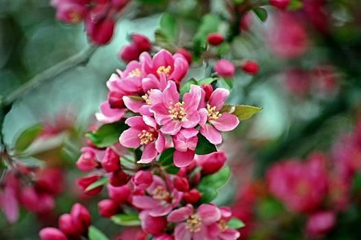 Spring Bokeh by David Earl Johnson