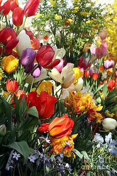 Spring Bulb Bonanza by Mary Lou Chmura