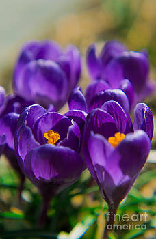 Spring Colors by Ekaterina LaBranche
