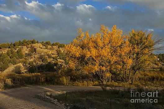 Jerry McElroy - Spring Creek Cottonwood
