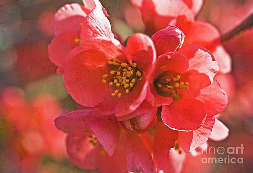 Valerie Fuqua - Spring Daydream