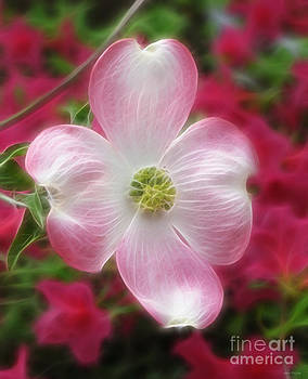 Spring Dogwood by Kathie McCurdy