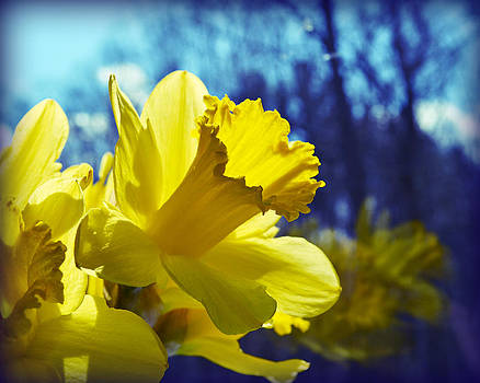 Spring Dreams by Mary Zeman