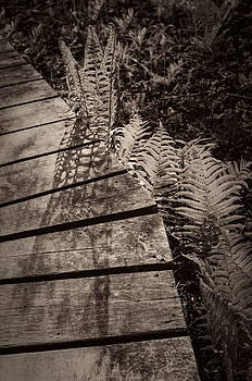 Alan Norsworthy - Spring Ferns beside the Limehouse Boardwalk