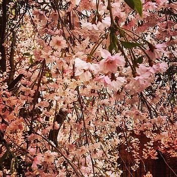 Spring! Finally by Derek Kaplan