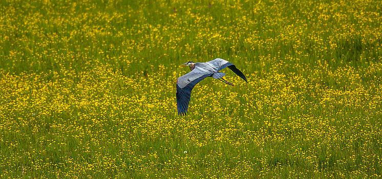 Kevin  Dietrich - Spring Flight