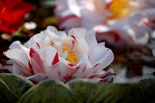Spring Fling by Karen M Scovill