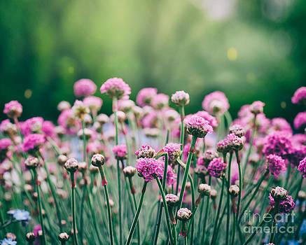 Mythja  Photography - Spring floral background