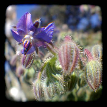Spring flower - Through the Viewfinder  by Gemma Geluz