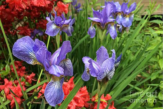 Edward Sobuta - Spring Flowers 2