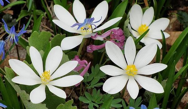 Dawn Hagar - Spring Flowers