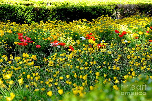 Spring Flowers in Balboa Park San Diego by Tanya  Searcy