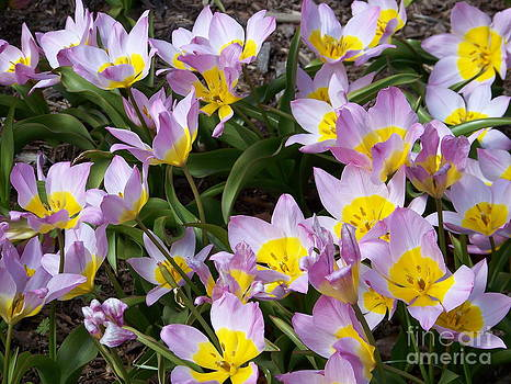 Spring Flowers by Kevin Croitz