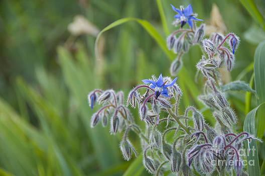 Leonardo Fanini - spring flowers