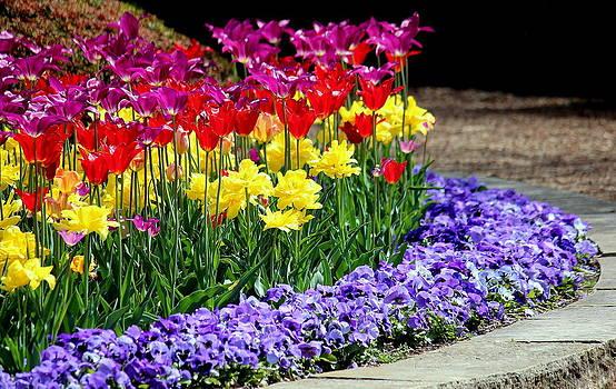 Rosanne Jordan - Spring Flowers