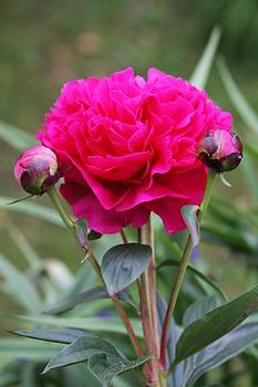 Vadim Levin - Spring Flowers