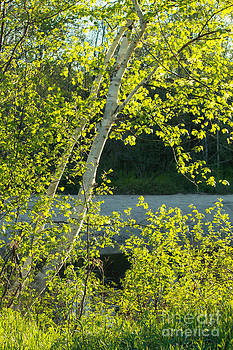 Spring Foliage by Denise Lilly