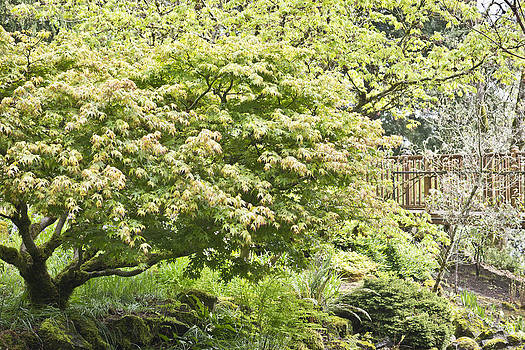 Priya Ghose - Spring Foliage