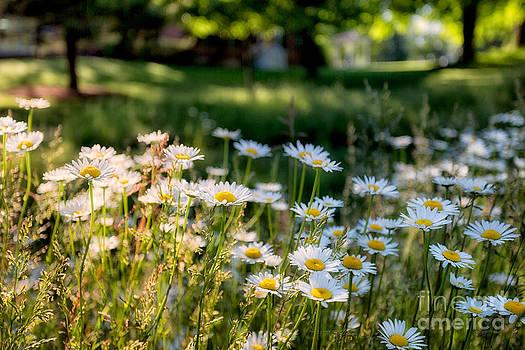 Spring Freshness by doug hagadorn by Doug Hagadorn